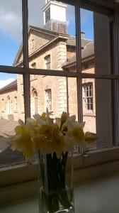 Daffodils in window Dig Corsham 2